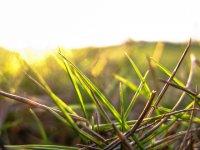 Fototapeten gras